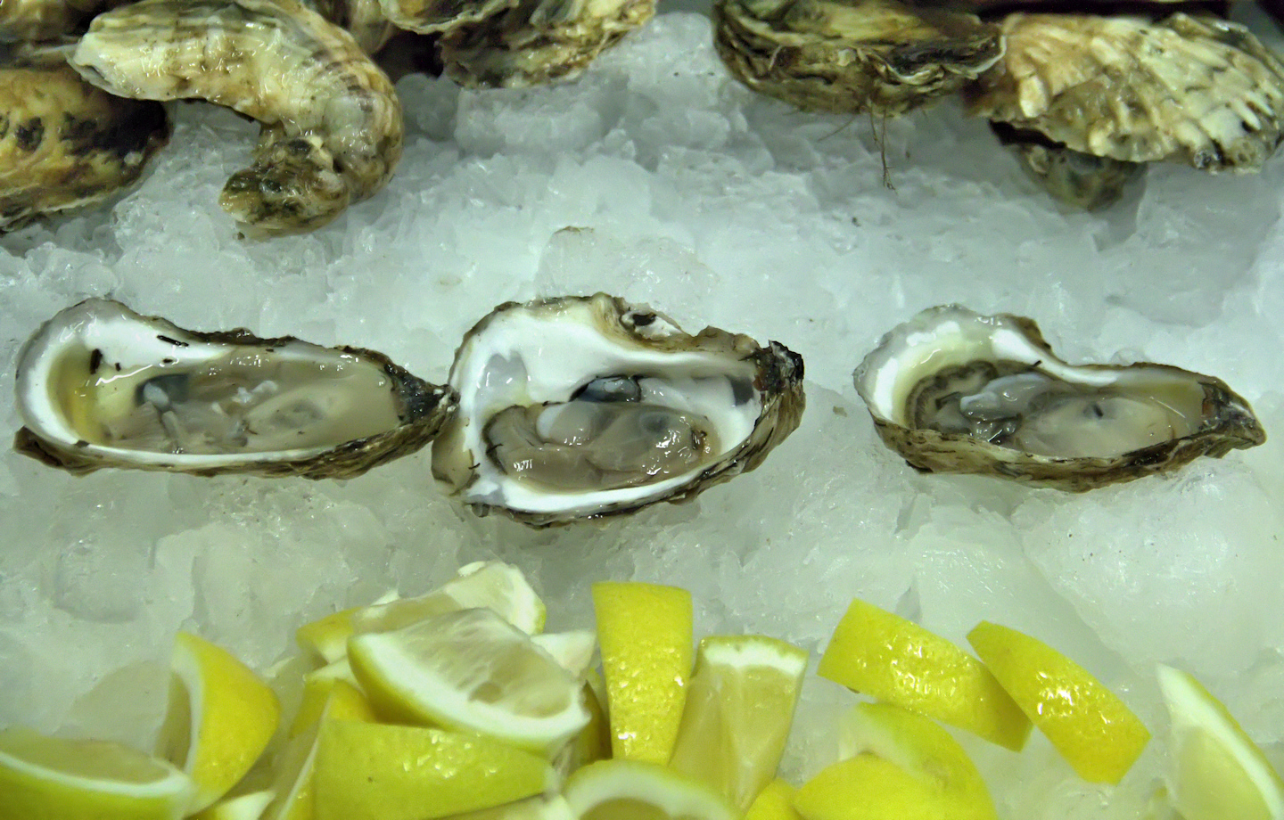 Florida-Apalachicola-oysters-Panacea-Oyster-Co-Op