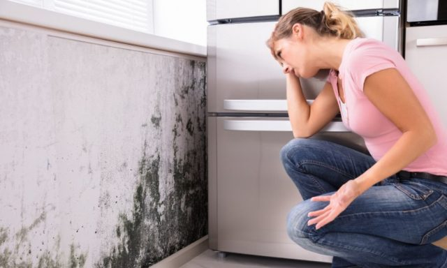 The Hidden Dangers of Black Mold in the House