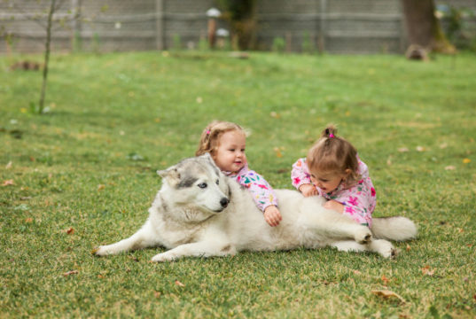 https://www.freepik.com/free-photo/two-little-baby-girsl-playing-with-dog-against-green-grass-park_9481708.htm