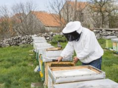https://www.freepik.com/free-photo/beekeeper-extracting-honey_4540577.htm#page=1&query=beekeeping&position=37