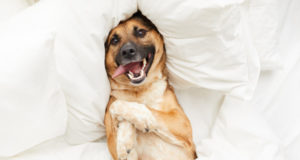 https://www.freepik.com/premium-photo/happy-dog-lying-comfortable-bed_8717445.htm#page=1&query=house%20pets&position=28