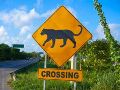 https://www.freepik.com/premium-photo/road-sign-panther-jaguar-crossing-mexico_3964359.htm#query=panther%20crossing&position=8