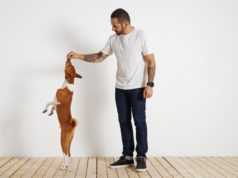 https://www.freepik.com/free-photo/young-brown-white-basenji-dog-is-standing-very-tall-its-rear-paws-as-its-bearded-tattooed-owner-motivates-it-by-offering-it-treat-high-up-air_11898817.htm#page=2&query=dog+treat&position=49