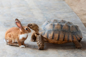 https://www.freepik.com/premium-photo/rabbit-turtle-are-discussing-competition_2734477.htm#page=1&query=hare%20tortoise&position=10