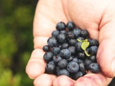 https://www.freepik.com/premium-photo/ripe-tasty-berry-palm-man-collect-wild-berries-mountains_13526885.htm#page=2&query=person+blueberries&position=9