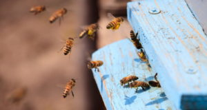 https://www.freepik.com/free-photo/closeup-honeybees-flying-blue-painted-wooden-surface-sunlight-daytime_10809939.htm#page=1&query=bees&position=21