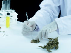 https://www.freepik.com/free-photo/doctor-hand-hold-offer-patient-medical-marijuana-oil_5475022.htm#page=1&query=delta%208&position=21